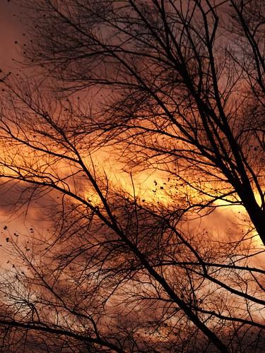 northeast railwayyard tyneyard tyneandwear sunset light clouds silhouette silhouettephotography trees autumn