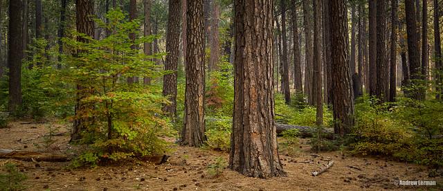 Yosemite-Fall 2017-38