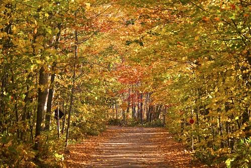autumn baymills chippewacounty fall2017 fallcolor fallcolour hiawathanationalforest landscape leaves michigan missionhill ojibwe overlook pointiroquois scenic stmarysriver unitedstates upperpeninsula