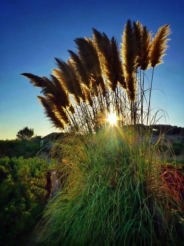 sunset nature landscape sun plant