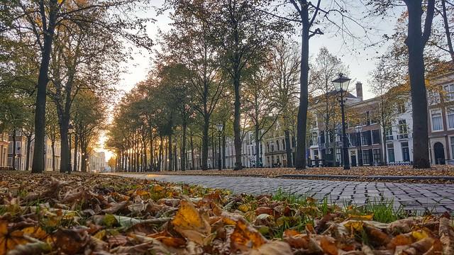 Fallen in Fall... The Hague, Netherlands