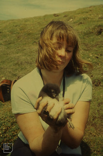 Young Puffin. 2nd extra mural trip to Skomer. 13.7.1963