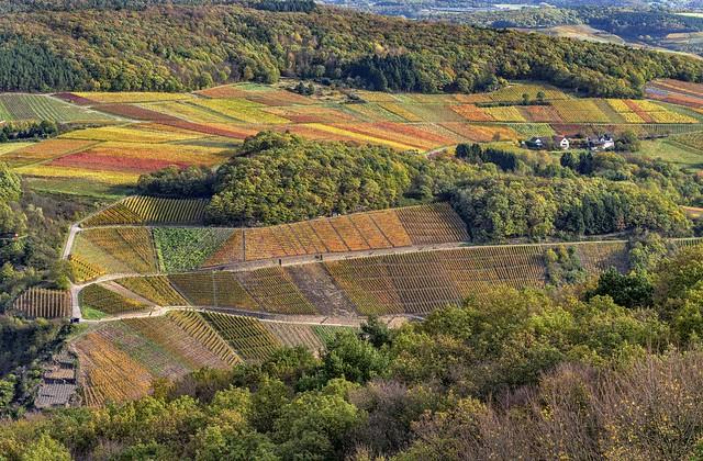 *Herbst im Tal der roten Trauben*
