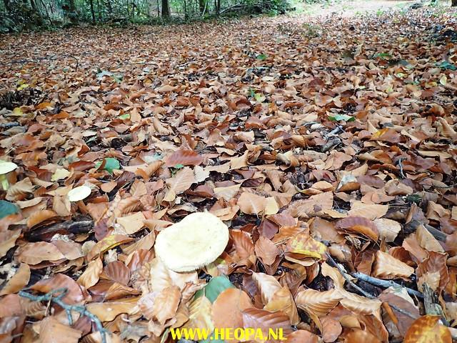 2017-10-07 Austerlitz 25 Km (56)