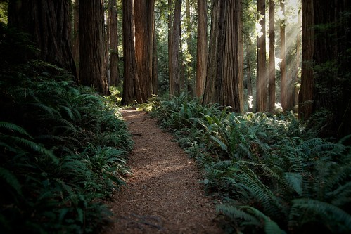Redwoods trail | by Eddy.H