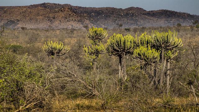 South Africa no 2_086