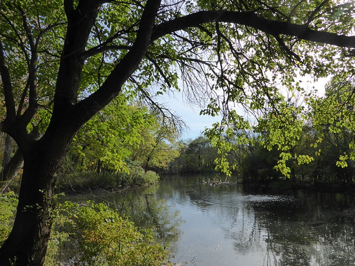 brookfieldil brookfieldzoo nature water pond lake landscape flora trees green leaves foliage reflection