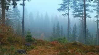 Misty forest | by Blackpeppereye