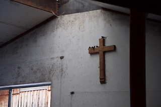Swallows roosting on a cross in a dairy barn | by andy.freed