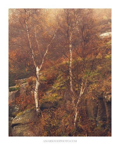 Autumn Splendour | by Amar Sood