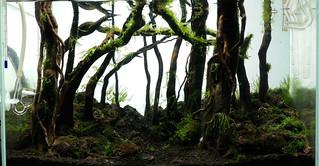 ada 45p forest scape nigel day 25 | by nigel_kh