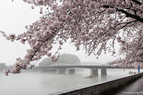 Inuyama-castillo-174 | by luisete