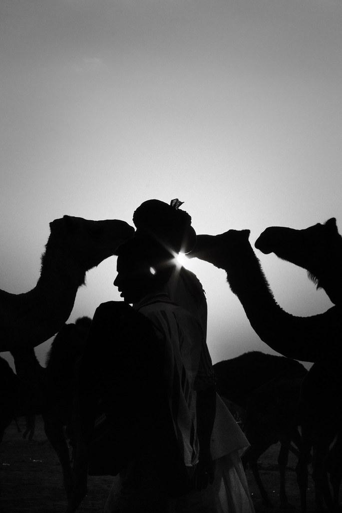 Again sun create shilhoute, a image tell many word Camel k