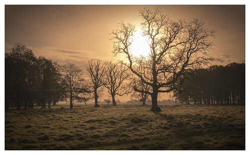 phoenix park forest dublin sunrise autumn nikon d5500