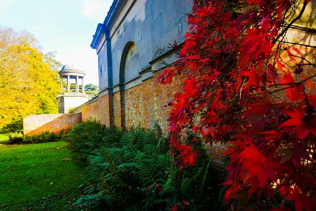 Brilliant Red Acer in bright sunshine