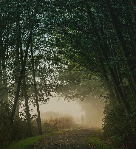 nikond810 nikon mood moody weather walking washingtonstate foggy fog jeanmarie jeanmarieshelton