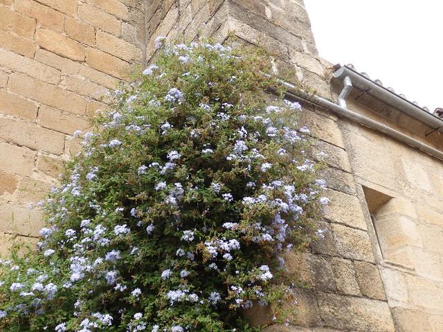 Flowering plant, stone walls