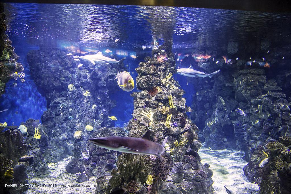 l' Aquarium, Barcelona