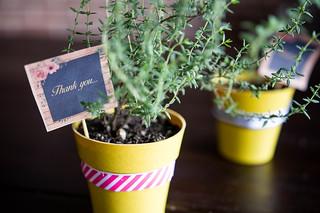 Thank you flower pots | by wuestenigel