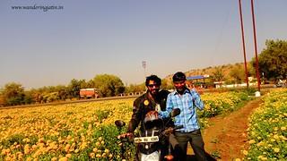 Fun times in the field of Marigold flowers | by wanderingjatin