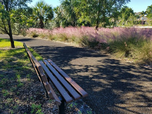 oakhammockpark park garden tropical florida browardcounty grass bench muhlygrass hairawnmuhly muhlenbergiacapillaris poaceae perennial native mistgrass gulfmulygrass ornamental hedgeplant plant outdoor
