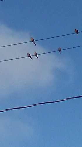 birds on a wire | by Laura Shindollar