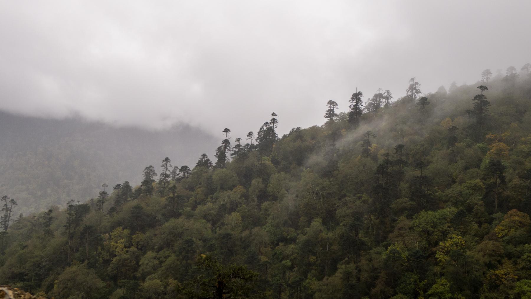 Route de Punakha à Trongsa
