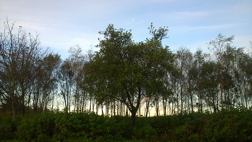 tree dawn galway ireland lumia1020 cameraphone green nature morning light