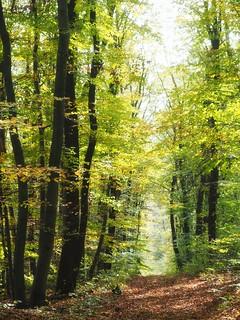 Lainzer Tiergarten   by NoDurians