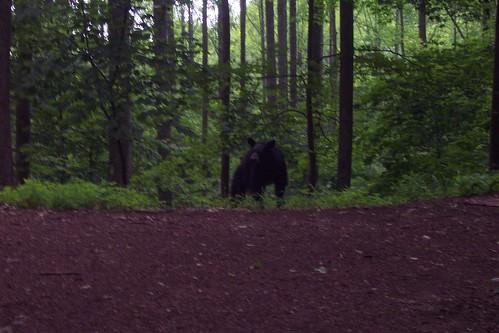 tennessee northcarolina blackbear appalachiantrail templehillgap tennesseenorthcarolinasection10