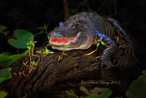 River Greeter along the St. Johns River   by QuakerVille