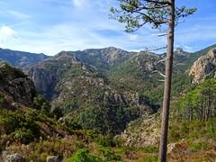 Bocca di Ricu : le haut du Finicione, le Castedducciu, Monte Calva, le ruisseau et la crête de Quarciteddu