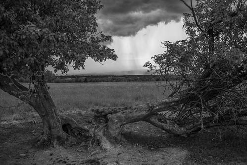 fingerlakesnationalforest fingerlakes nationalforest centralnewyork newyork forest pasture field tree grass sky storm clouds thunder rain spring bw blackandwhite monochrome canon 6d canon6d trail hiking interloken