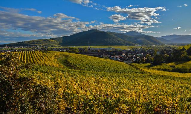 Golden Autumn in Alsace