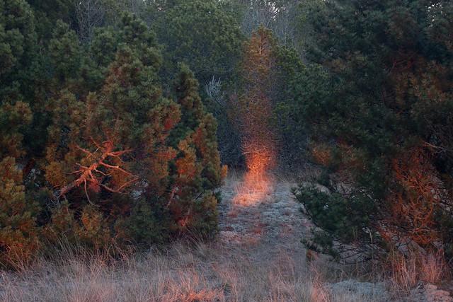 the spirit of the dusk