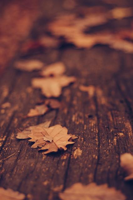 Autumn leaf on autumn leaf