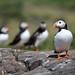 <p>Farne Islands, UK</p>