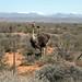 Oudtshoorn, Western Cape, South Africa