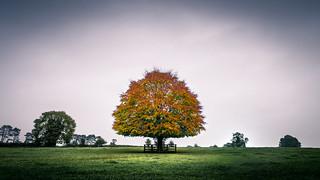 The tree - Kildare, Ireland - Landscape photography | by Giuseppe Milo (www.pixael.com)