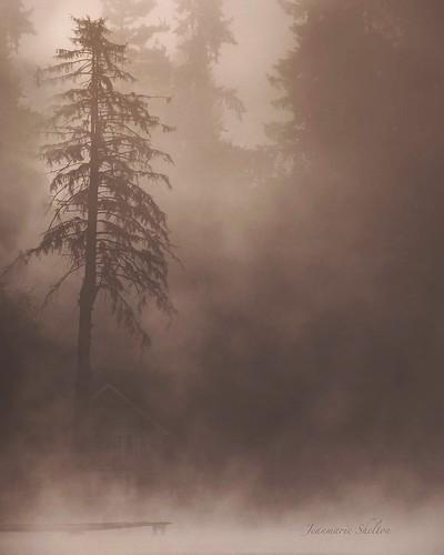 peaceful serene washingtonstate cottagelake lake weather foggy mood moody mist fog jeanmarie jeanmarieshelton