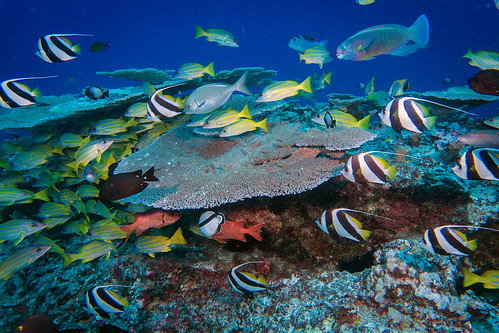 Fish Variety at French Frigate Shoals