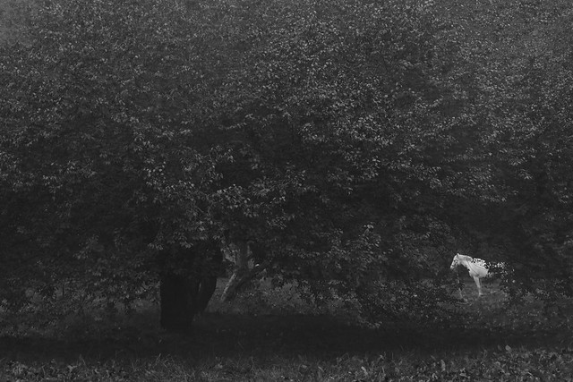 my monochrome autumn IV