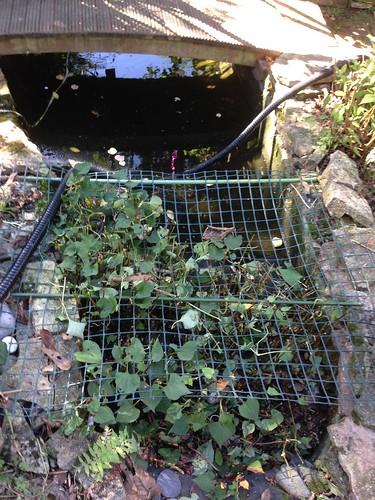 Pond clean Stubbington