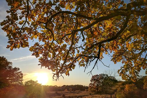 october 2017 uncasdunesseunitsna minnesota fallcolors mndnr oaksavana sunset