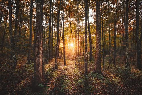 forest gorge kentucky hiking travel fall autumn leaves sunset sunlight landscape landscapes