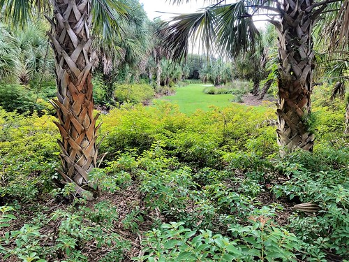 park garden tropical florida browardcounty grass trees