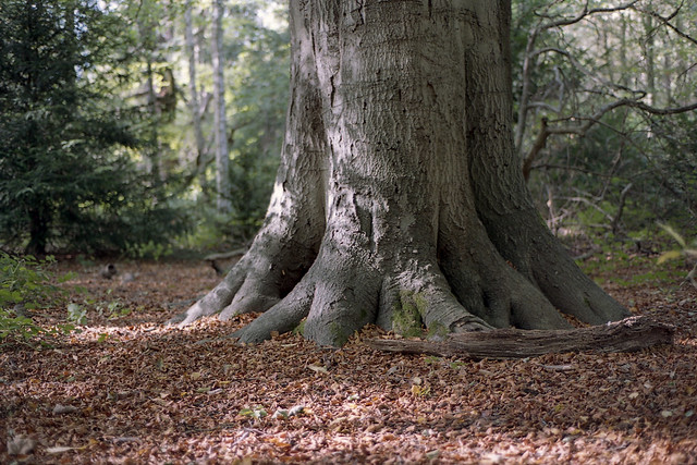 FILM - In the woods