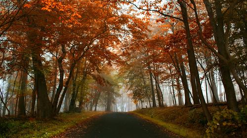 fall fallfoliage fog valleyforge valleyforgenationalhistoricalpark road pennsylvania path nature landscape fallinpa morning