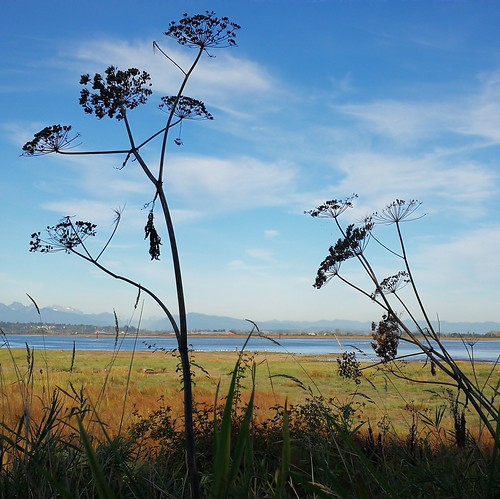 nature details landscape canada bc surrey vancouver flora fall herbst autumn crescentbeach