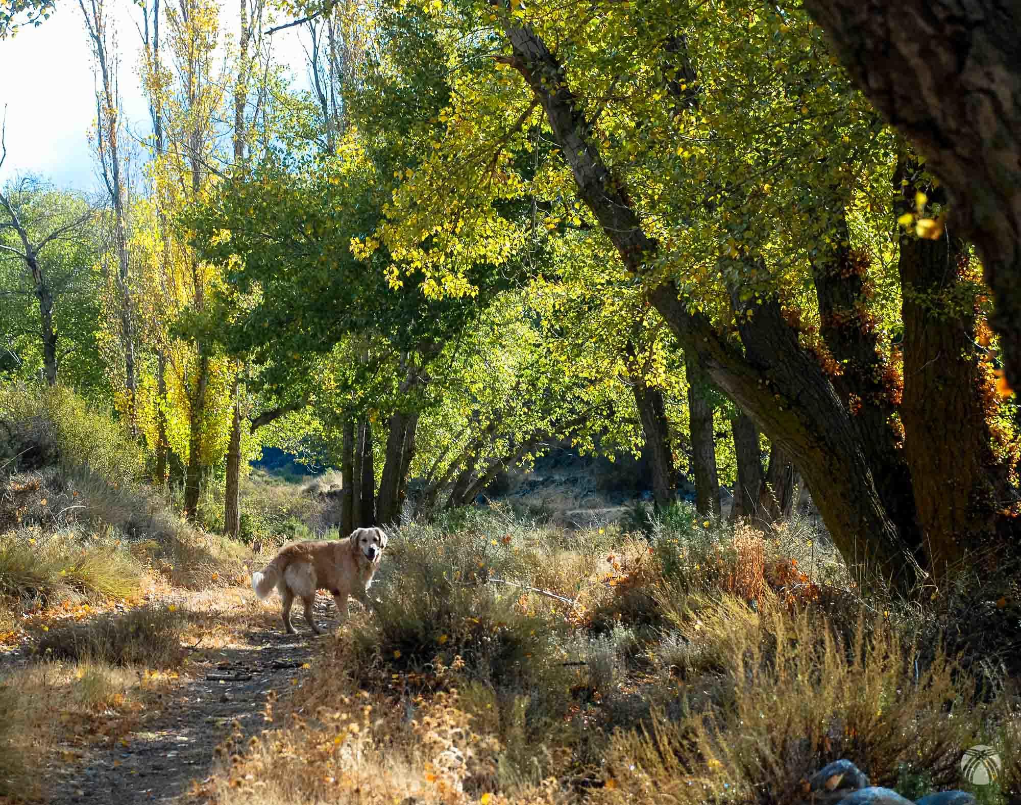 Primeros pasos por el arroyo de Baúl